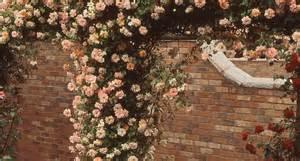 Come Coltivare Le Roselline In Vaso by Come Coltivare Le Ricanti Piante In Giardino