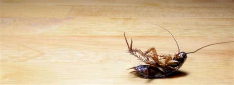 come eliminare le blatte in cucina come eliminare le blatte in casa