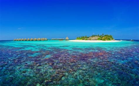 maldives dive scuba diving maldives thailand liveaboards sea