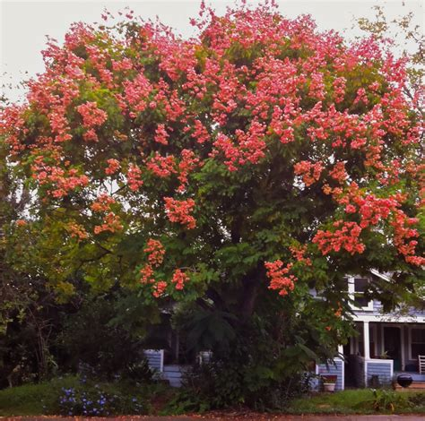top 28 fall blooming trees bright fall garden design