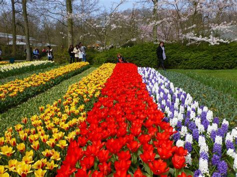 amsterdam flower garden tulip gardens keukenhof it s never late