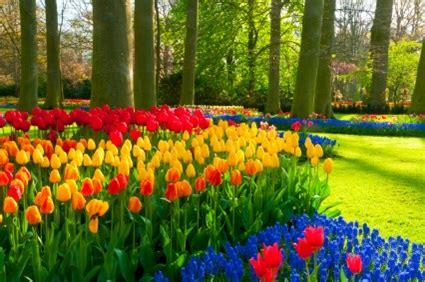 amsterdam museum flowers amsterdam tours flowerfields and keukenhof netherlands