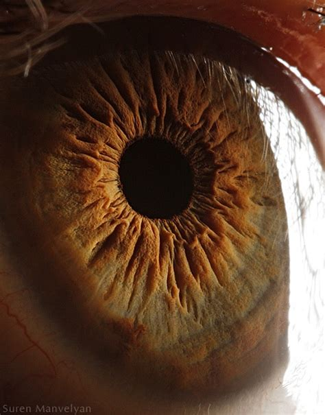 the photographers eye a the science behind these amazing photographs of the human eye smart news smithsonian