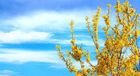 piante fiori gialli fiori gialli bellissimi e diversi fai da te in giardino