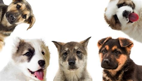breed test best breed quiz to help you choose your next pup top tips