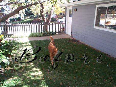 dog friendly backyard ideas triyae com dog friendly backyard no grass various