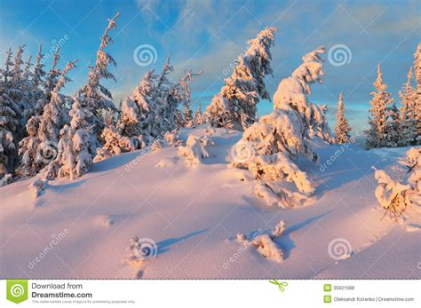 frosty forest royalty free stock frosty in the woods stock photo image of evening