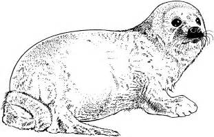 seal coloring pages free seal coloring pages