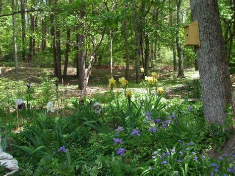 woodland garden green spaces pinterest
