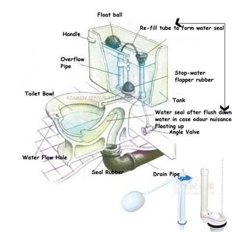 Parts Of A Water Closet by Toilet Flapper Valve Diagram Briggs Toilet Parts Diagram