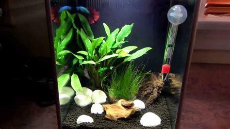 L Fish Tank by New 2 6 U S 10 L Fish Tank And New Betta