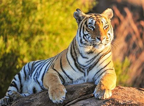 imagenes de animales carniboros animales carnivoros imagenes hd im 225 genes de animales