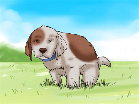 potty a puppy how to potty a puppy 15 steps with pictures wikihow