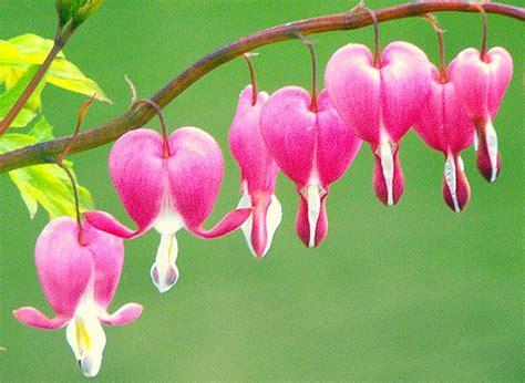 bunga bunga cantik  dunia bunga cantik  dunia