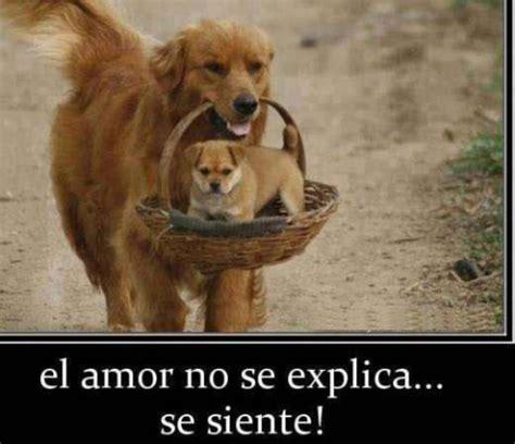 imagenes bonitas para facebook cumpleanos tiernas imagenes para imagenes tiernas de perritos con mensajes