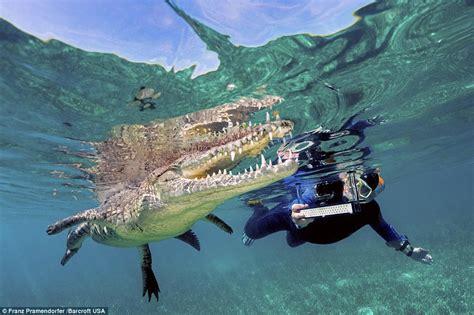 travel from jamaica to cuba by boat austrian tourists swim with crocodile at jardines de la