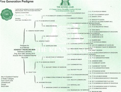 pedigree certificate template mullenscote gundogs stud dogs and dogs for