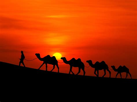 wallpaper sunset desert camels hd nature