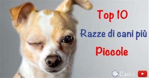 elenco cani da appartamento top 10 delle razze di cani pi 249 piccole