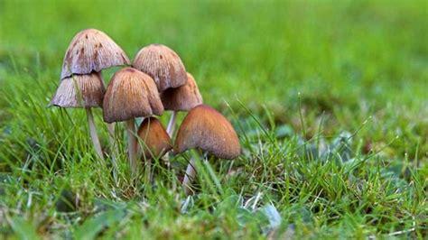 Pilze Im Gartenrasen by Pilze Im Rasen Loswerden Ursache Und Abhilfe
