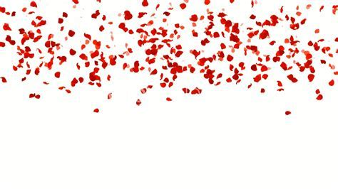 Rose Petals Falling.love,pattern,romantic,rose,valentine