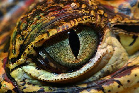 imagenes ojos de dragon como dibujar ojos de drag 243 n comodibujar net
