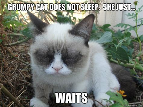 Grumpy Cat Sleep Meme - i m just so tired poor grumpy cat quickmeme