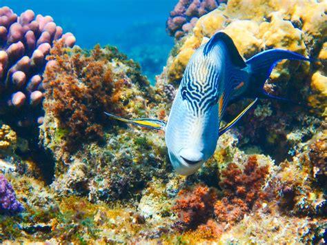 los animales marinos al animales marinos que puedes encontrar al bucear en cozumel