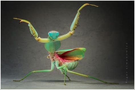 Amazing Beetles amazing insect images by igor iwanowicz 60 pics