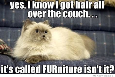 clean dog hair off couch furniture weknowmemes