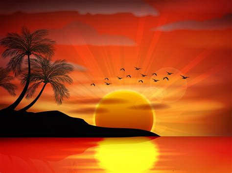 sunset sea paradise tropical island palms silhouette birds