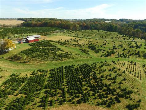 cut down your own tree in md baltimore tree farm cut your own trees montgomery md