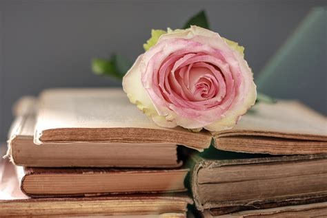 books nature petals roses with flowers