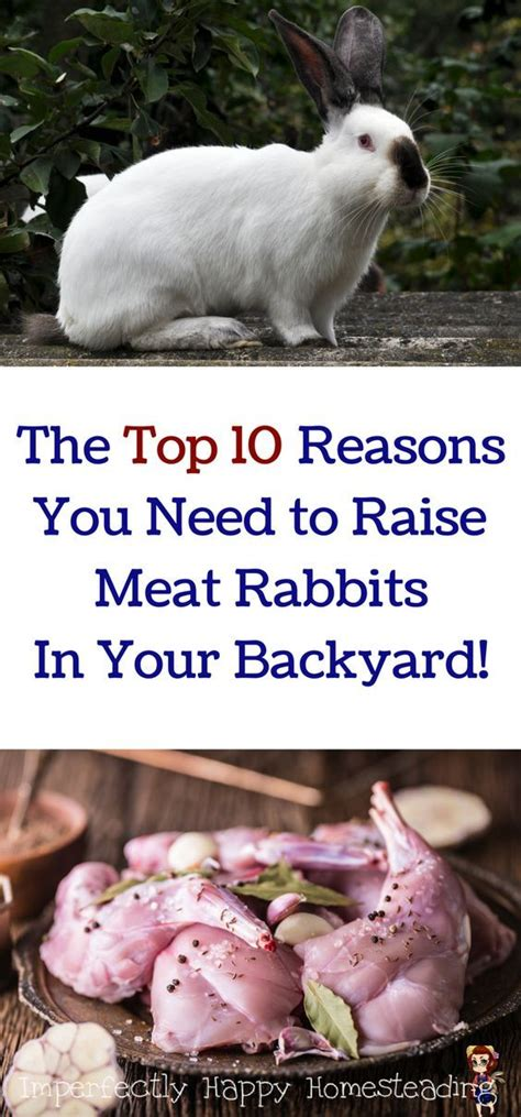 raising meat rabbits your backyard 688 best green acres is the place to be images on