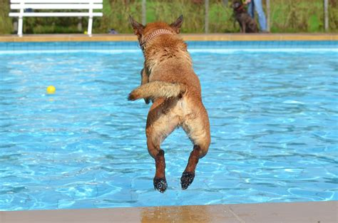 puppy in dogs who water dogs in water pictures dogs