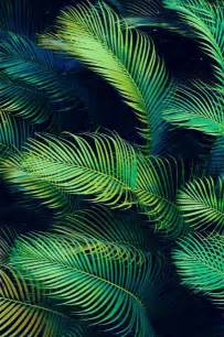 you could use these sweet backgrounds 23 photos nature ferns and patterns
