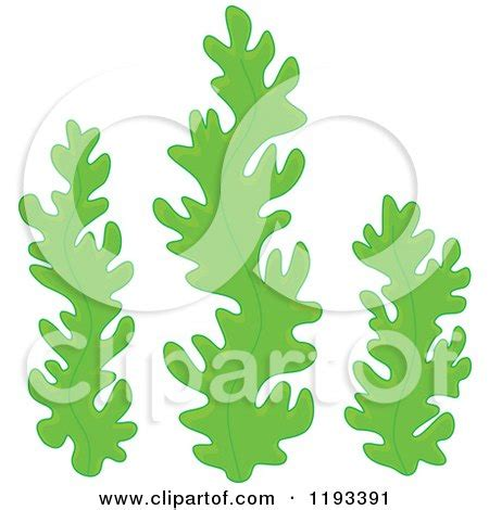 royalty free rf seaweed clipart illustrations vector