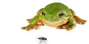 tree frogs eat