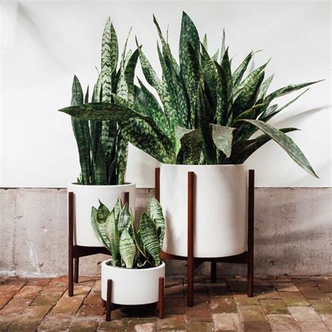 plants for indoors poisonous houseplants 10 indoor plants for pet owners and parents to avoid pistils nursery