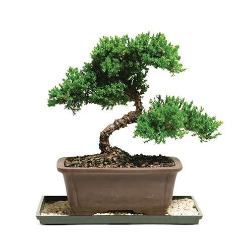 brussel s bonsai upc amp barcode upcitemdb com