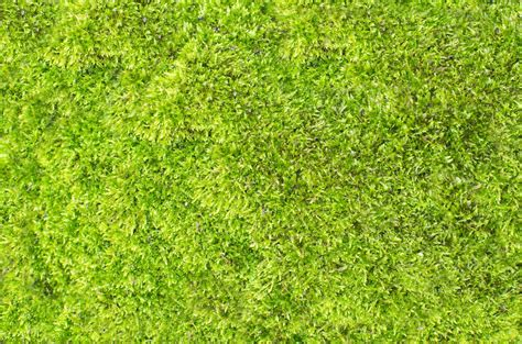 pattern nature grass free images outdoor abstract plant sport field lawn