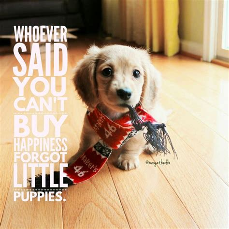puppy sayings 17 best puppy quotes on quotes