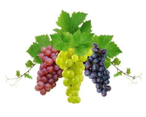imagenes de uvas en bombas foto mural racimos de uvas alimentos ref 10964464