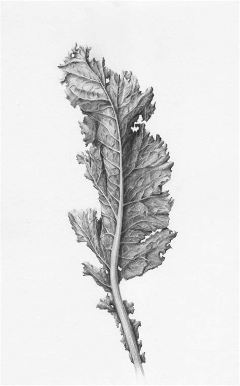 botanical drawing using graphite 1785001590 best 25 botanical drawings ideas on botanical illustration fern tattoo and pattern