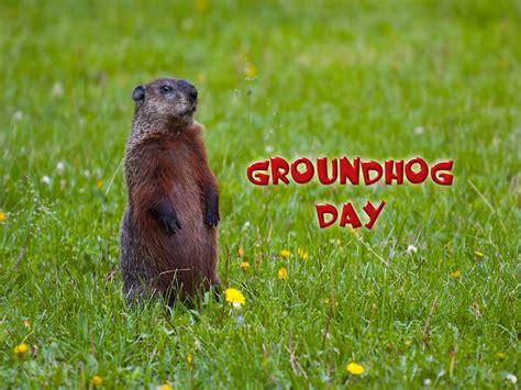 groundhog day hd groundhog wallpaper wallpapersafari