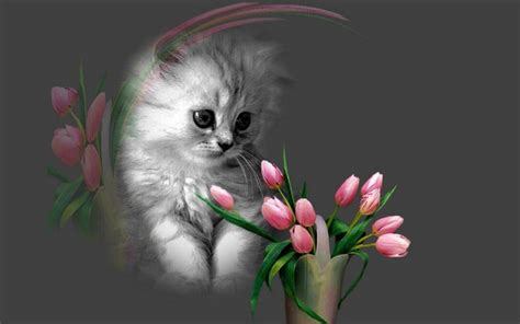 cute wallpaper mobile free download cute cat sleeping wallpaper with flowers for mobile phones
