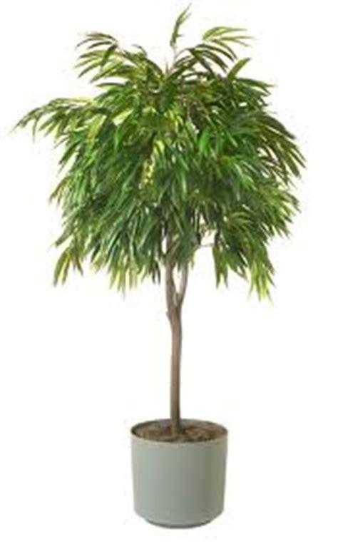 piante da ufficio purifica 5 piante purificano l di casa e ufficio