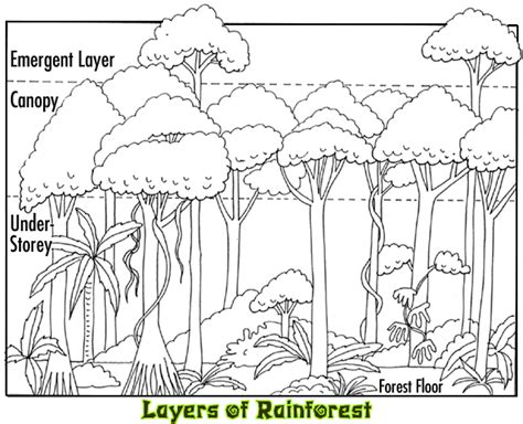 Rainforest Canopy Coloring Page | image gallery layers of the rainforest