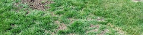 the ins outs of overseeding lawns in spring trugreen
