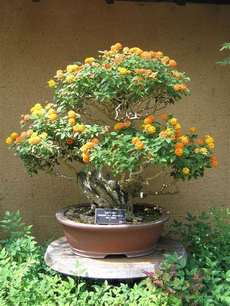 pflanzen japanischer garten 616 lantana bonsai tree bonsai bonsai baum